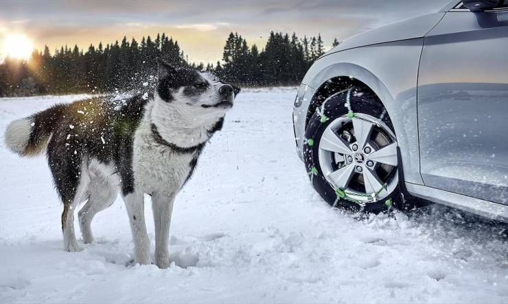 thumb_OCTAVIA_WHEELS_snow_chain_dog